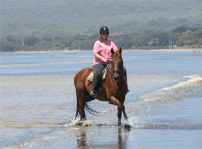Photograph of Horse and Rider at Cosy Corner Beach, Albany, Western Australia